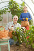 Family in vegetable plant — Stock Photo