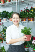 florist with Crassula at  store  — Stock Photo