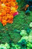 Nature colorful background  — Stock Photo