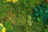 Nature green background — Stock Photo