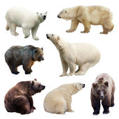 Set of bears — Stock Photo