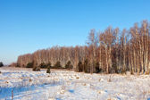 Wintry lanscape with birches  — Stock Photo