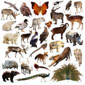 Set of  asian animals. — Stock Photo