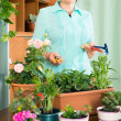 Smiling mature woman doing work in her small garden  — Stock Photo #57464445