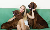 Girl sitting   with two Irish setters — Stock Photo