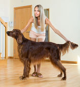 Adult girl with red Irish setter — Stock Photo