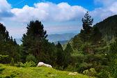 Letní krajina s horských lesů — Stock fotografie