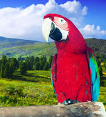 Macaw at wildness — Stock Photo