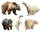 Set of bears. — 图库照片