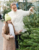 Choosing New Year's tree — Stock Photo