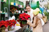 Buying Christmas flowers — Stock Photo