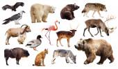 European animals. — Stock Photo