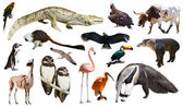 Set of  animals — Stock Photo