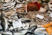 Various raw fresh fish — Stock Photo