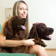 Young woman with Irish setters — Stock Photo #64284507