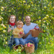 Parents and child with harvested apples — Stock Photo #66552827