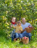 Rodina s sklizené jablka v zahradě — Stock fotografie