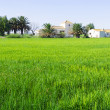 Rural landscape with rice fields — Stock Photo #69341927