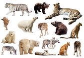 Set of  predators on white — Stock Photo