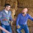 Two farmers working in barn — Stock Photo #69434395