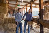 Two farm workers feeding horses — Stock Photo