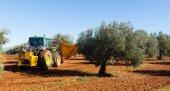 黒オリーブを収穫トラクター — ストック写真