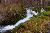Stream at forest in autumn — Stock Photo