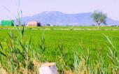 在埃布罗三角洲稻田 — 图库照片