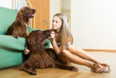 girl hugging two dogs — Stock Photo