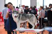 Dog exhibition of Catalonia in Vic — Stock Photo