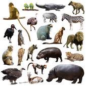 Set of African animals — Stock Photo