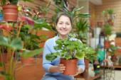Female florist with auricula flower — Stock Photo