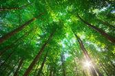 Para a floresta. composição de natureza. — Foto Stock