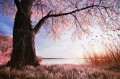Spring nature — Stockfoto