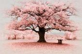 Infraröd stora trädet — Stockfoto