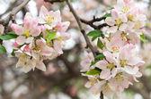 Spring leaf of apple — Stock Photo