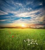 Green spring meadow. — Stock Photo