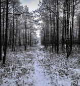Winter landscape of early morning — Stock Photo