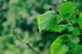 Gotas de lluvia en la hoja verde — Foto de Stock