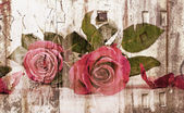 Two beautiful red roses — Stock Photo