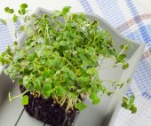 Fresh Cress salad — Stock Photo