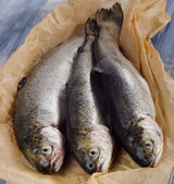 Fresh trouts on table. — Stock Photo