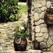 Basket with flowers planted in it — Stock Photo #78448430