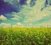 Rapeseed field - vintage retro style — Stock Photo