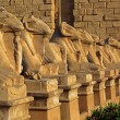 Egypt statues of sphinx in karnak temple — Stock Photo #61977199