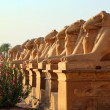 Egypt statues of sphinx in karnak temple — Stock Photo #61977219