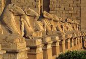 Egypt statues of sphinx in karnak temple — Stock Photo