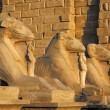 Egypt statues of sphinx in karnak temple — Stock Photo #65713025