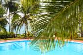 Palm leaf in front of swimming pool by sea — Stock Photo