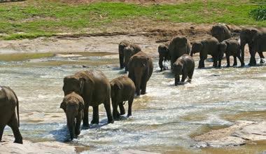 Wild Elephants in river — Stock Video